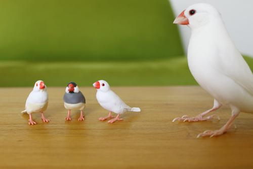 雀と文鳥コレクション ガチャガチャ