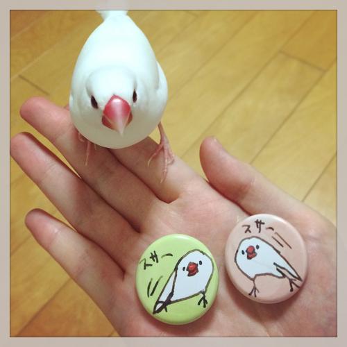 スサー文鳥