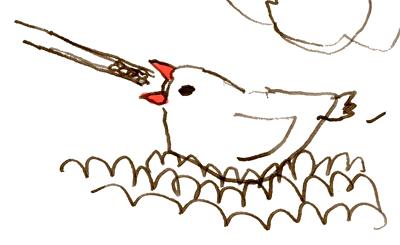 ヒナの文鳥