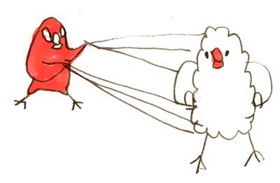 スパイダーマン文鳥
